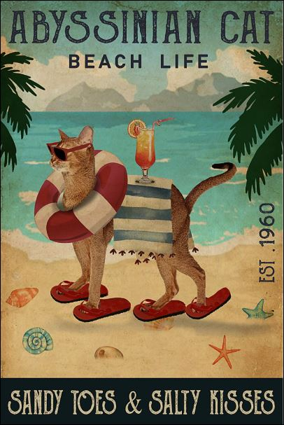 Abyssinian cat beach life sandy toes and salty kisses poster