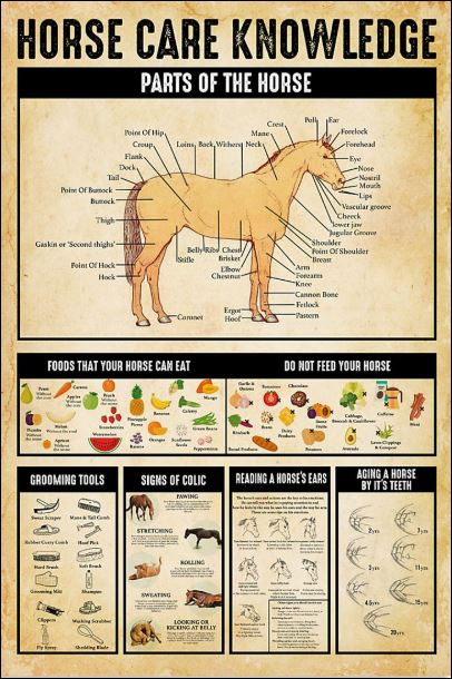Horse care knowledge poster