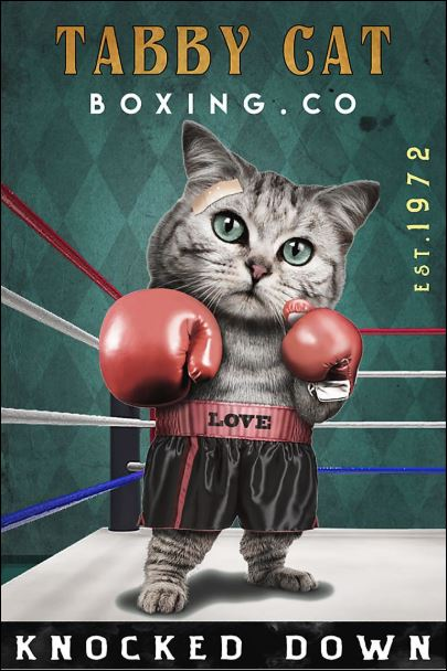 Tabby cat boxing co knocked down poster