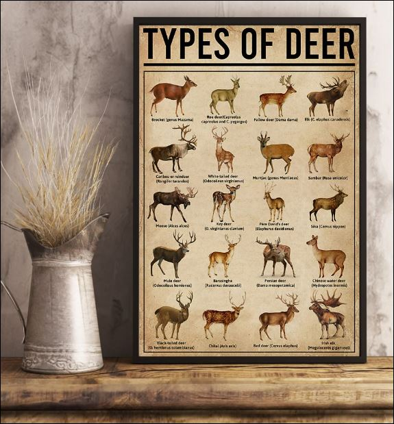 Types of Deer poster 1