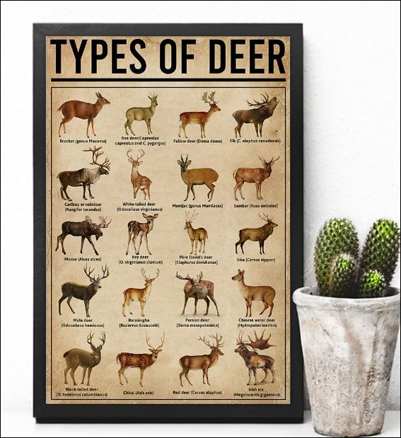 Types of Deer poster 2