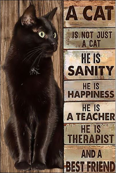 A cat is not just a cat he is sanity he is happiness he is a teacher he is therapist poster