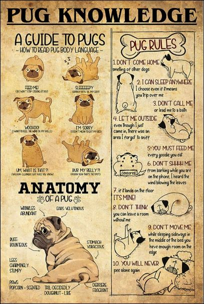 Pug knowledge poster