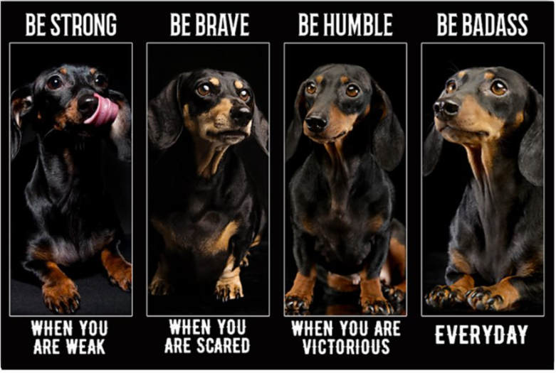 Dachshund be strong when you are weak be brave when you are scared poster