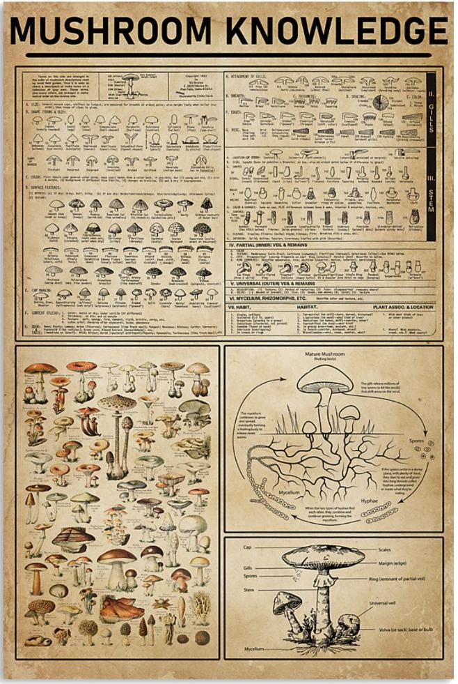 Mushroom knowledge poster