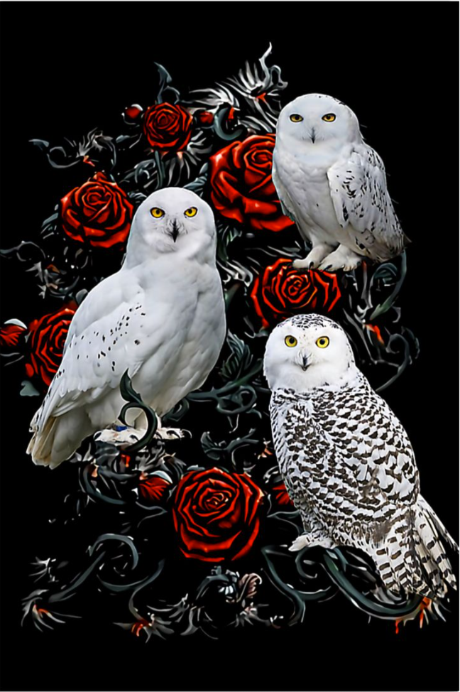 Owls And Roses poster
