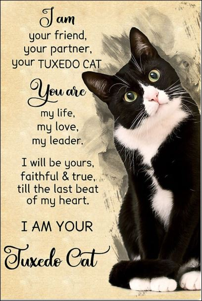 I am your friend your partner your tuxedo cat poster